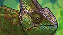 Chameleon Avatar_Fotor.jpg
