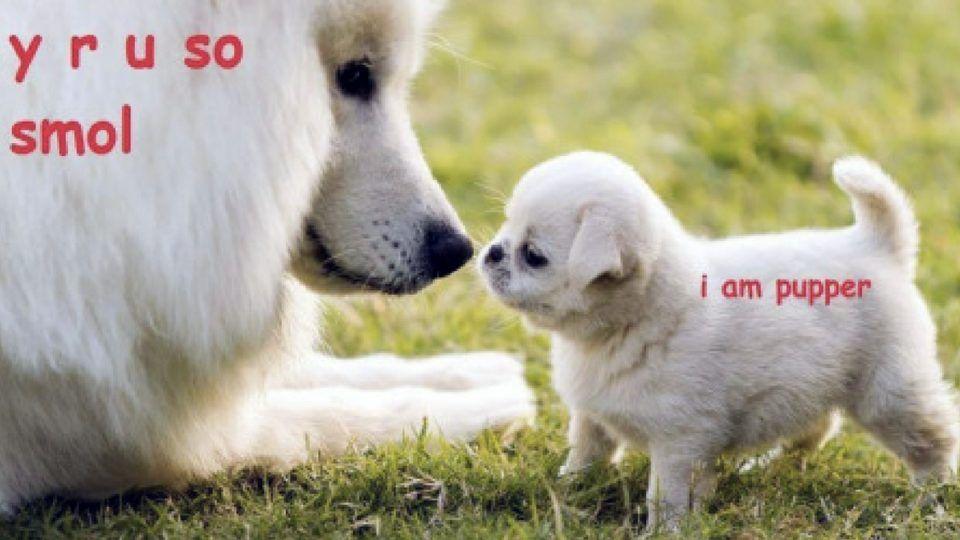 everything-you-need-to-know-about-doggo-lingo-HERO-960x540.jpg